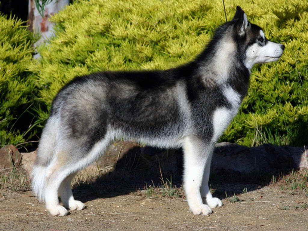 14 Husky In Mens Size