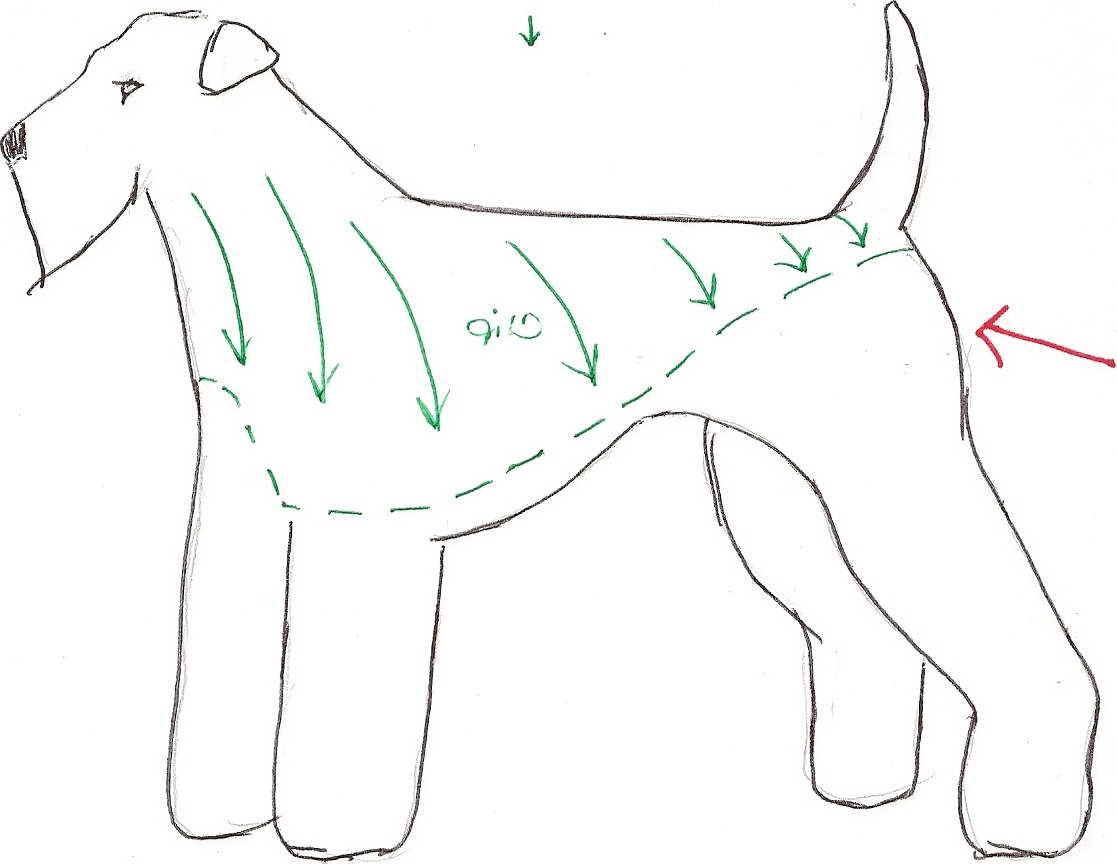 Airedale Terrier Grooming Pattern Petsidi
