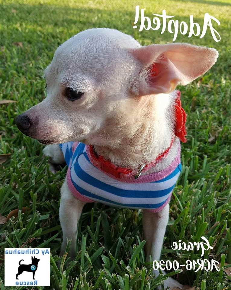 Placid Dogs Pets
