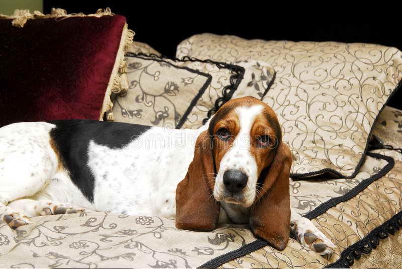 Basset Hound Bed