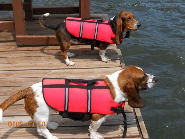 Basset Hound Life Jacket