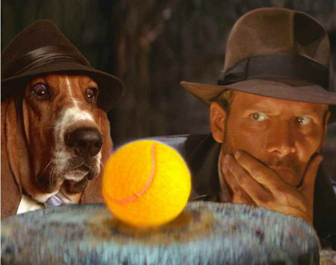 Basset Hound Movies