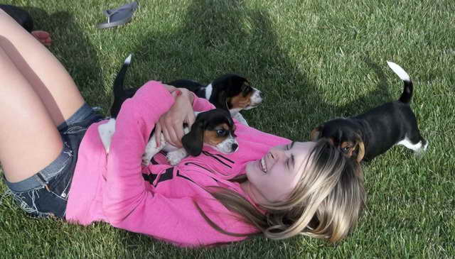 Beagle Puppies Columbus Ohio Pets And Dogs