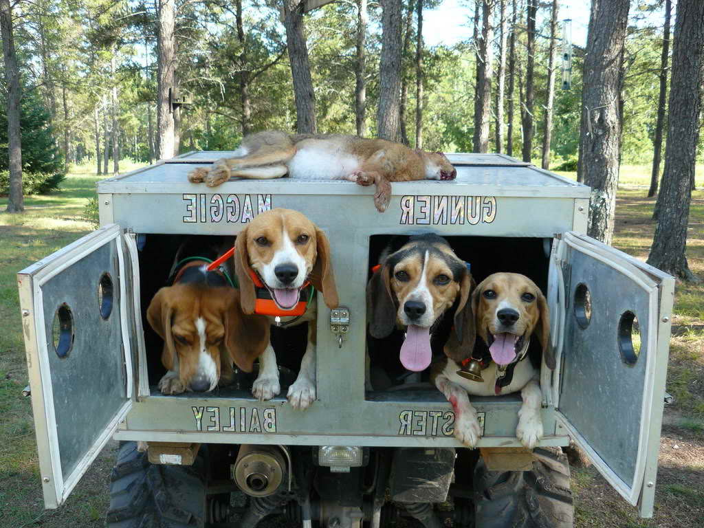 beagle truck box pets and dogs
