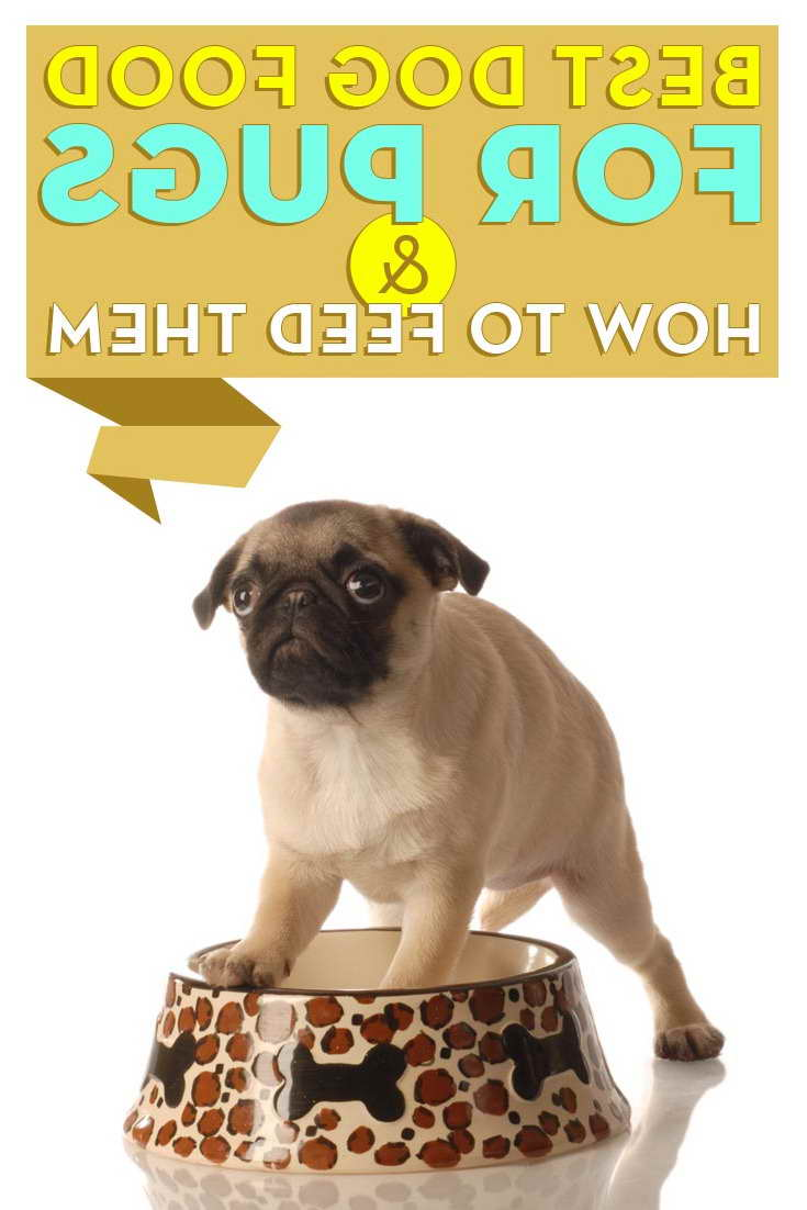 best food for pug puppies best food for pug puppies pets and dogs 9742
