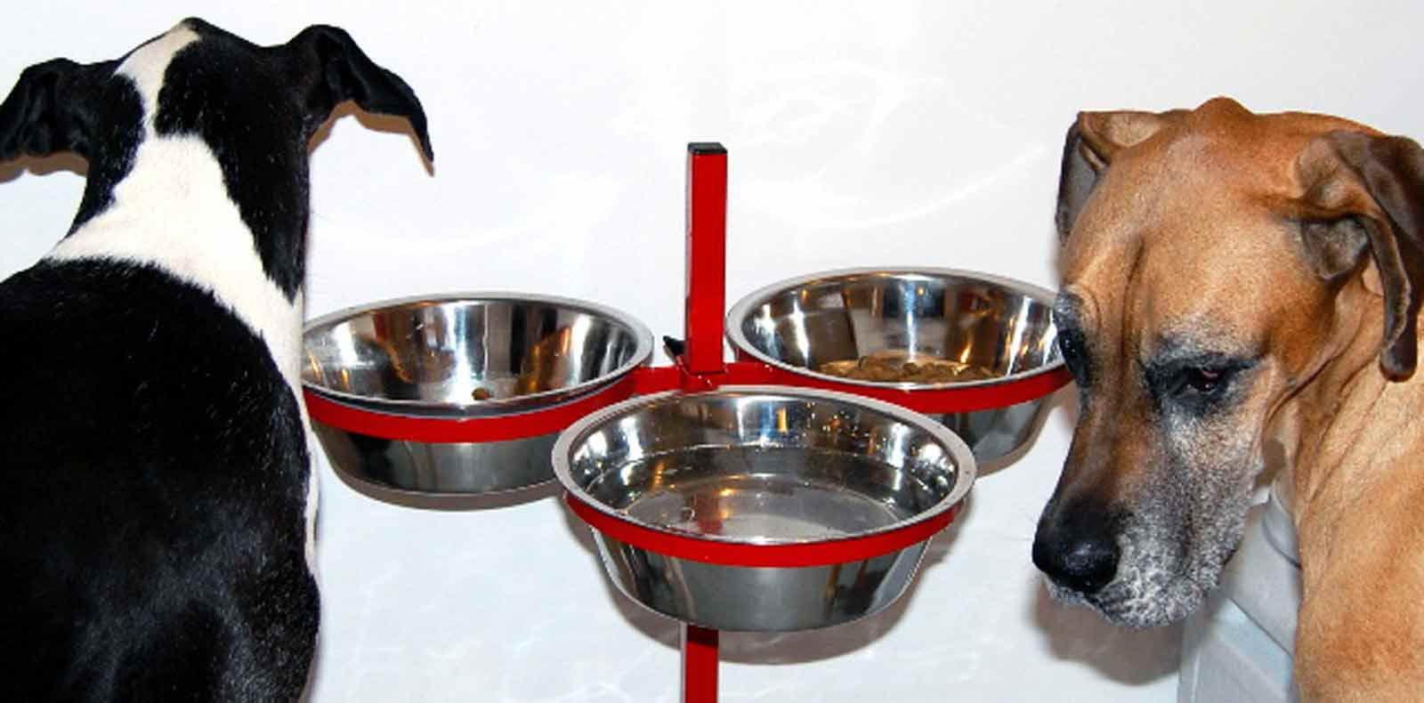 Best Food To Feed Great Dane Puppy Petsidi