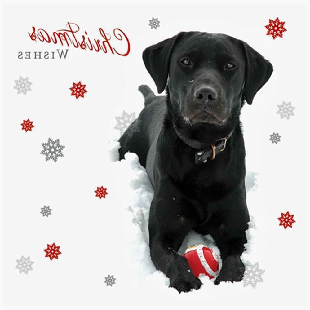 Black Labrador Christmas Cards | Pets and Dogs