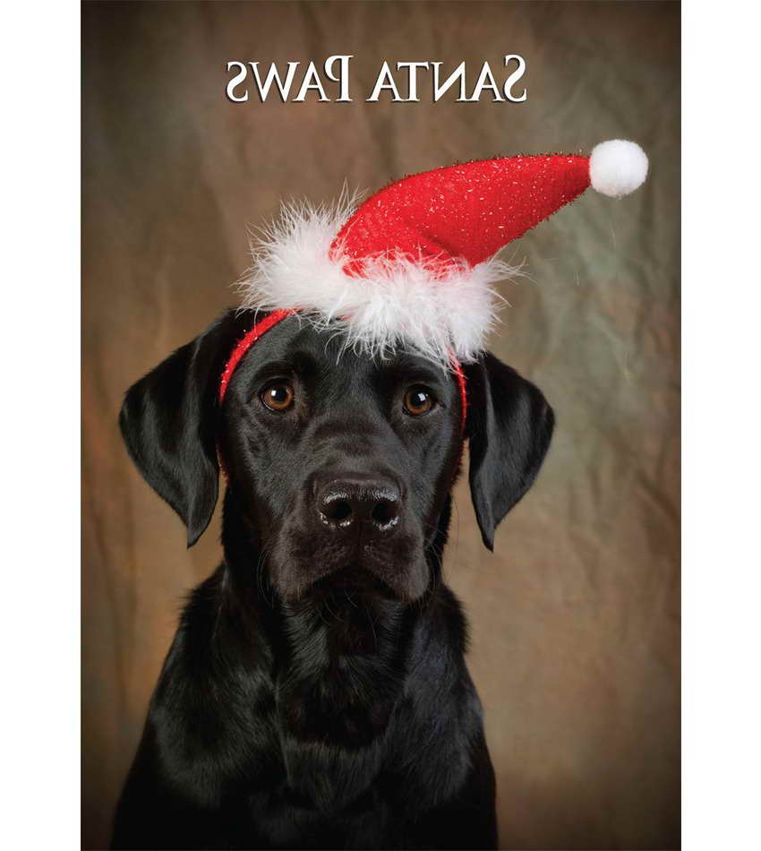 Black Labrador Retriever Christmas Cards | Pets and Dogs