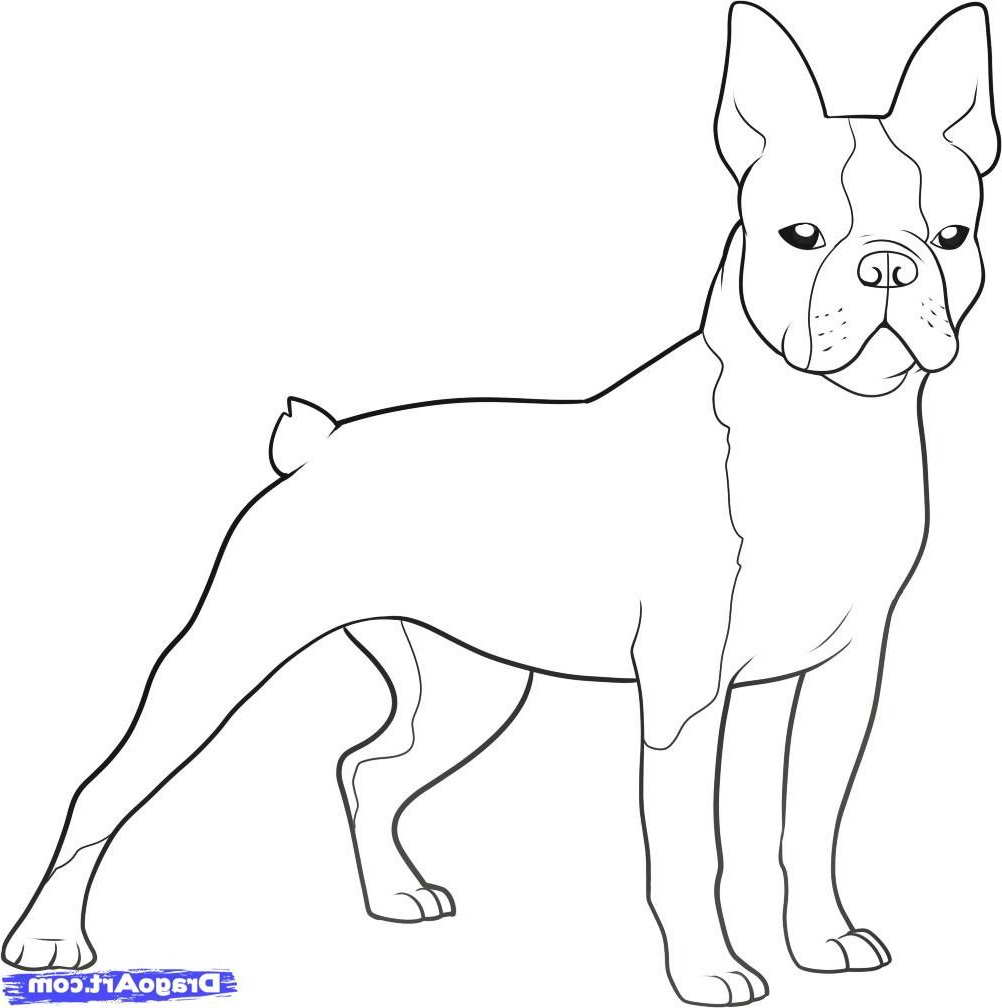 boston terrier coloring pages to print | Boston Terrier Coloring Page | PETSIDI