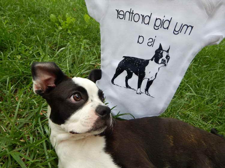 Boston Terrier Merchandise For Sale | PETSIDI