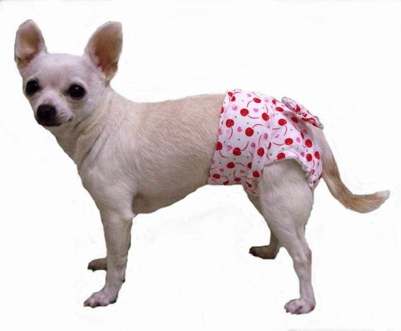 chihuahua diarrhea pets and dogs part 45 1550