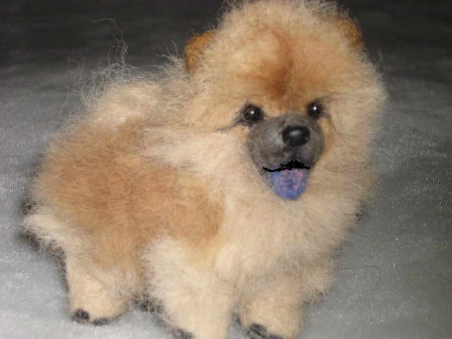 chow chow pomeranian mix chow chow pomeranian mix for sale pets and dogs 1363