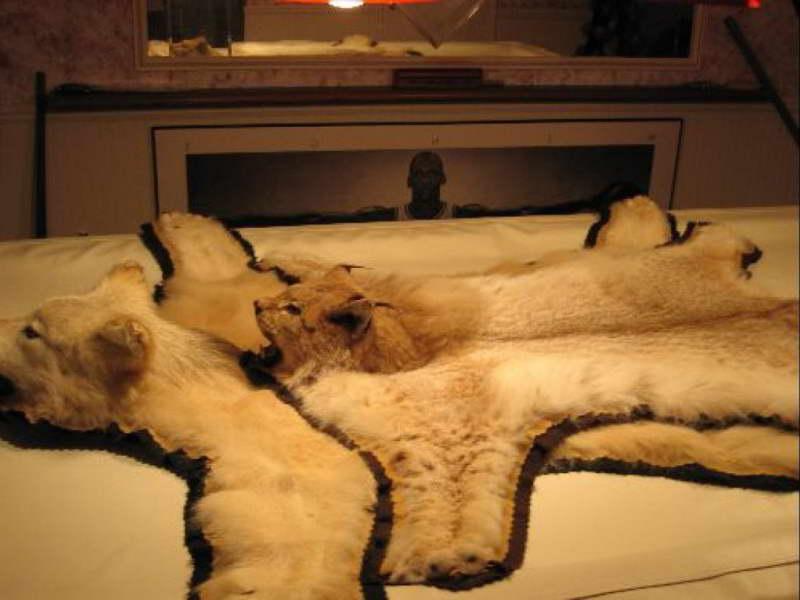 Craigslist Wheaten Terrier | PETSIDI