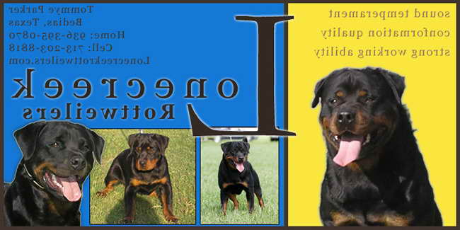 German Rottweiler Puppies For Sale In Houston Texas Pets And Dogs