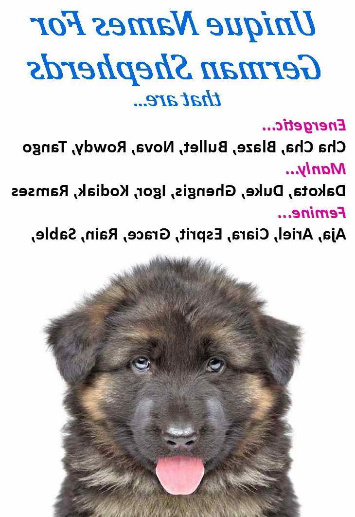 German Shepherd Female Dog Names   Pets and Dogs