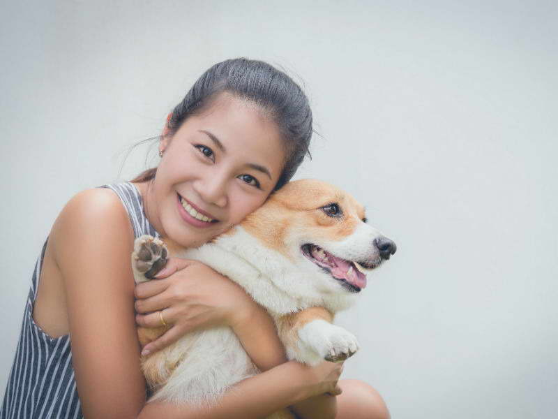 Coydog Nh: Pets And Dogs