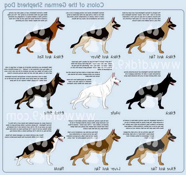 German Shepherd Type Dogs Petsidi