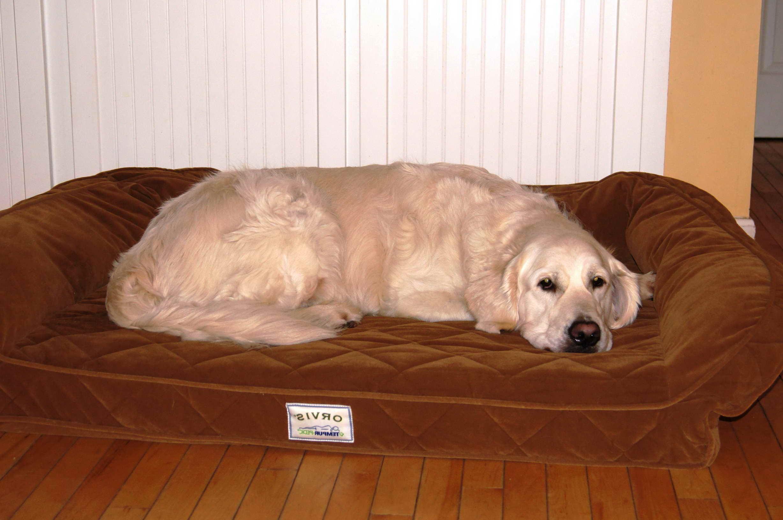 Golden Retriever Bed Petsidi