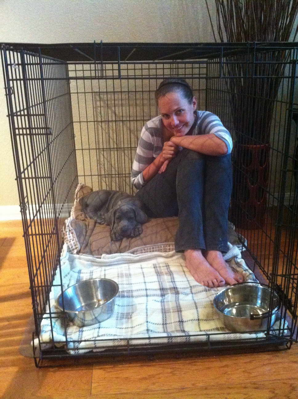 Great Dane Crate Training