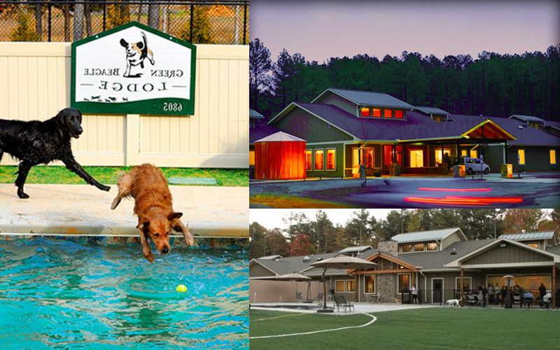 Green Beagle Lodge