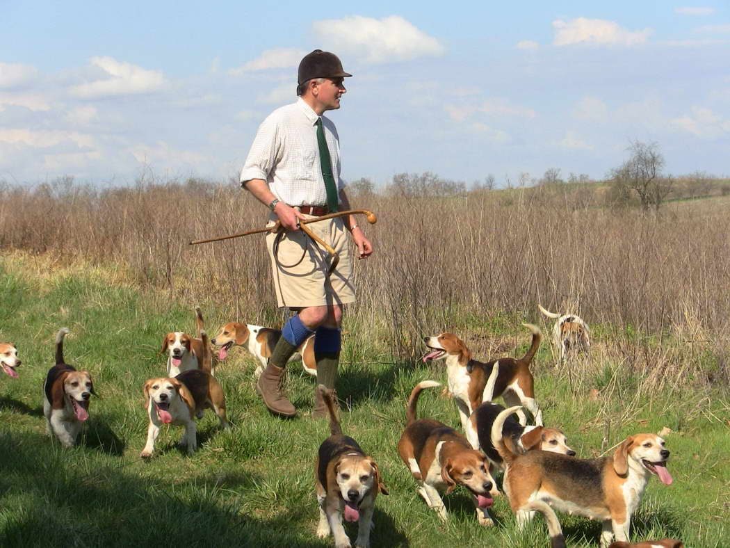 How To Train A Beagle To Hunt