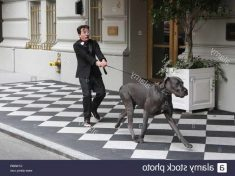 How Much Exercise Does A Great Dane Need