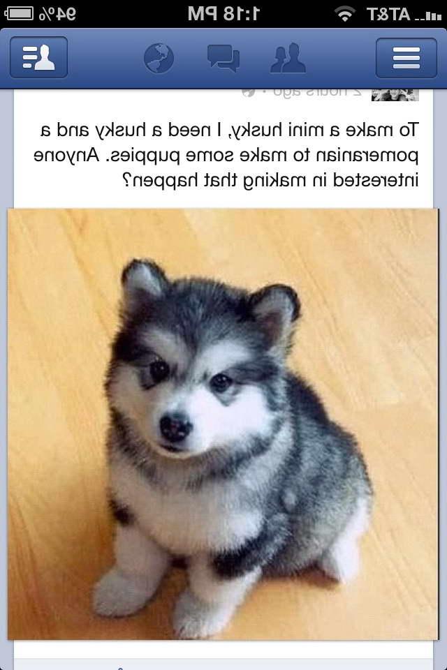 I Want A Husky