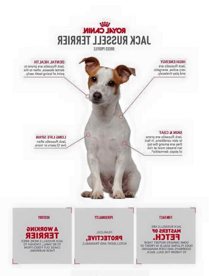 Jack Russell Terrier Training Secrets