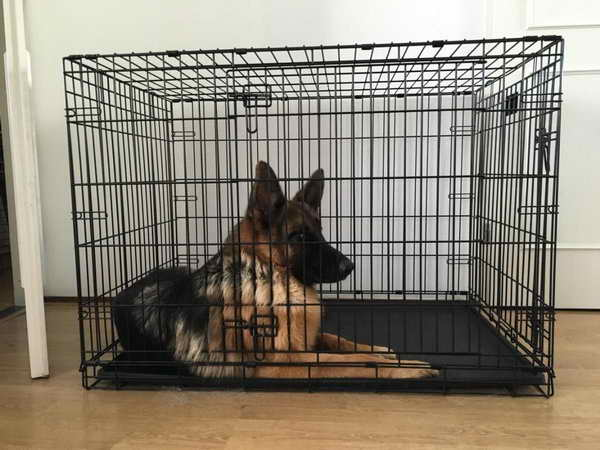 Kennel For German Shepherd Size