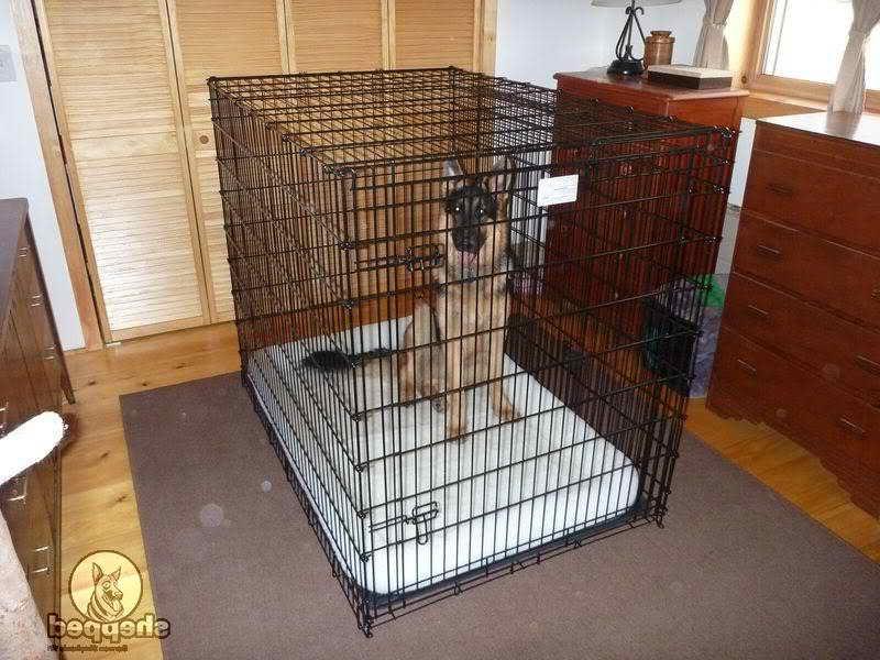 Kennel For German Shepherd