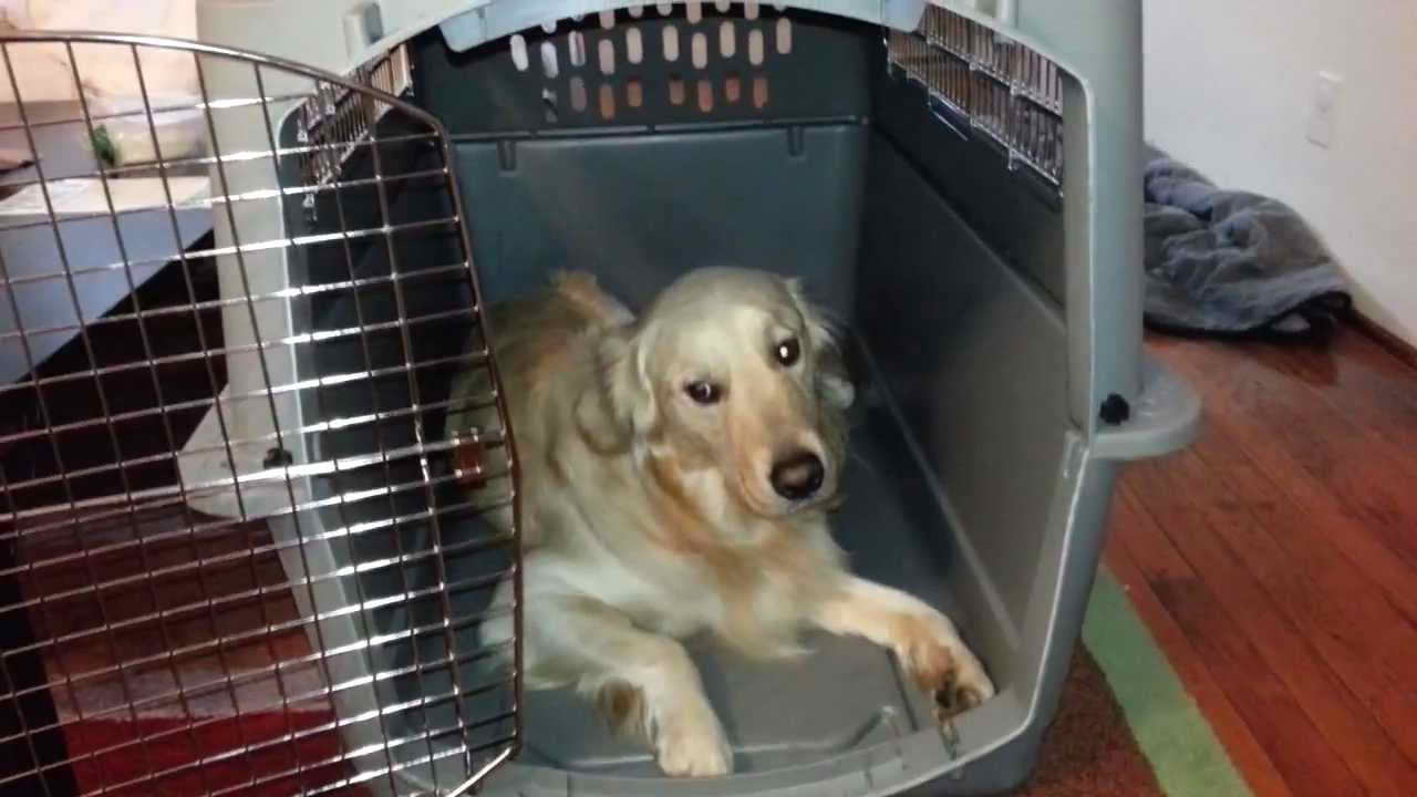 Kennel For Golden Retriever