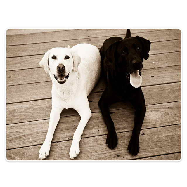 Labrador Blanket