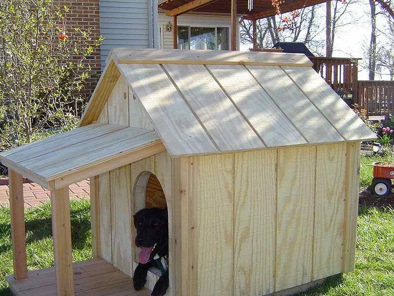 Labrador Dog House