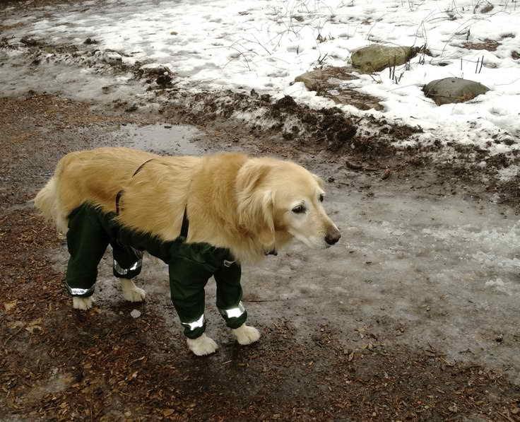 Labrador Pants