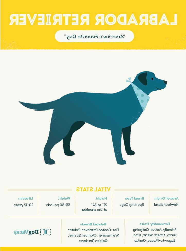 Labrador Puppies Facts