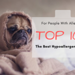 Top 10+ The Best Hypoallergenic Dogs For People With Allergies