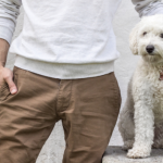 8 Things to Remember Before Bringing Home a Dog