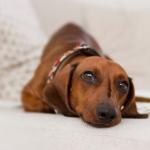 Understanding Dog Anxiety