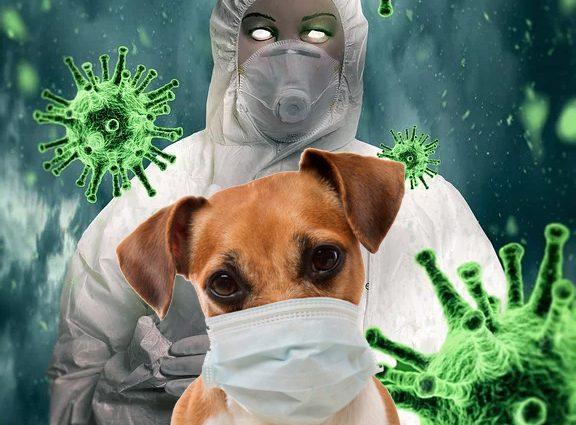 Can Coronavirus in Dogs Spread to Humans