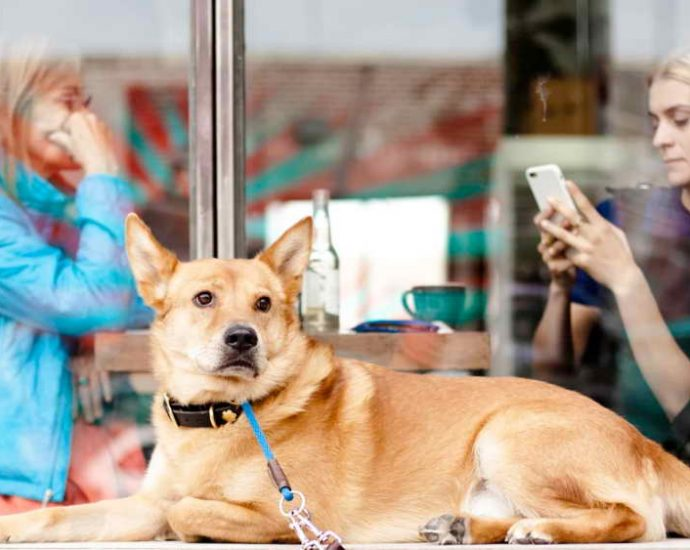 Basics of Dog Sterilization